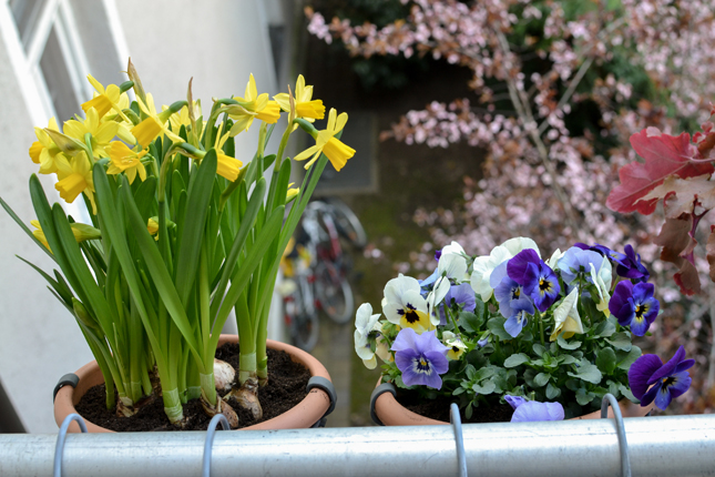 spring balcony, balcony, small balcony, planting, plants, urban jungle bloggers, Victorinox