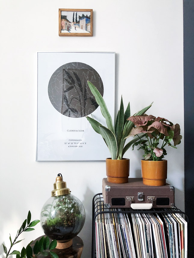 Plant Tribe, Jungle Tribe, urban Jungle bloggers, Bergamotte, limited edition, plant collection, plants